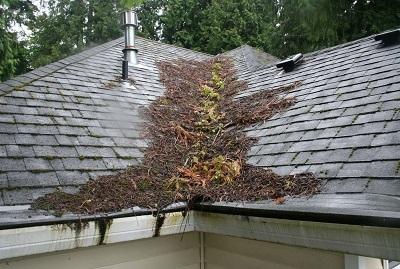 Roof Maintenance Tree Debris
